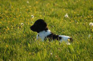 In het gras